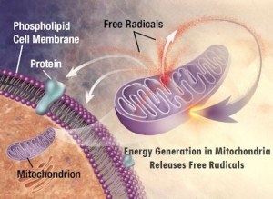 MitocondrioEnergia