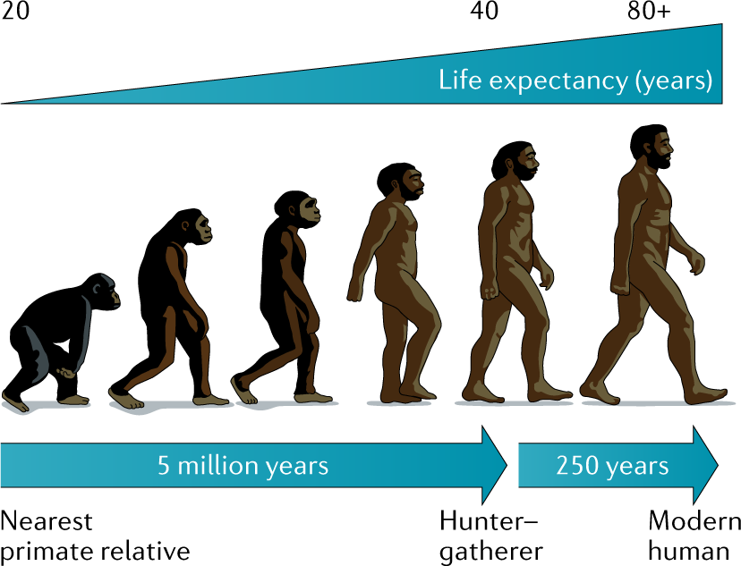 EvoluzioneEtà_OK